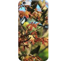 Blue tit on acer palmatum iPhone Case/Skin