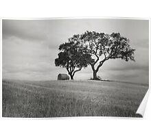Rural Landscape 2 Poster