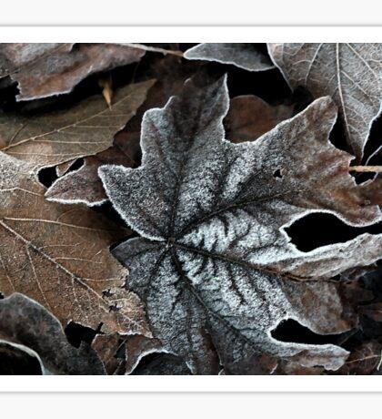 Frost sprinkled maple leaves Sticker
