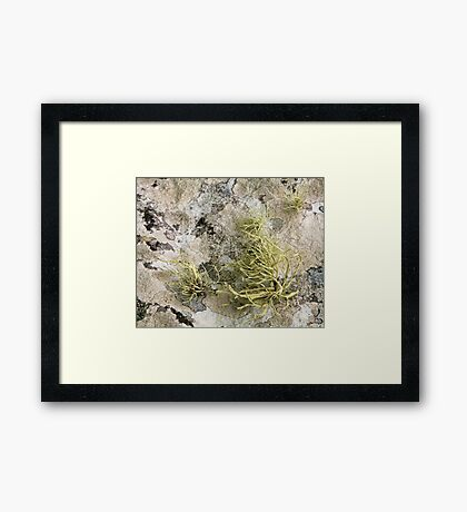 Lichen on tomb in Shalwy Valley, Kilcar, Donegal Framed Print