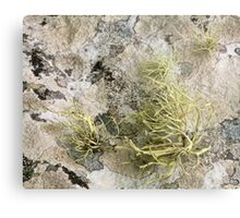 Lichen on tomb in Shalwy Valley, Kilcar, Donegal Metal Print