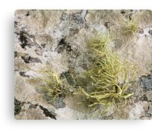 Lichen on tomb in Shalwy Valley, Kilcar, Donegal Canvas Print
