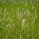 Amber and Green Grassland by Rebecca Bryson
