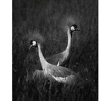 Duet Photographic Print
