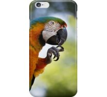Blue and orange macaw sitting on a perch and cleaning its talons iPhone Case/Skin