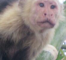 The Monkey Sticker