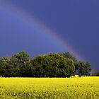Trees, A Canola Field and a Rainbow by Don Arsenault