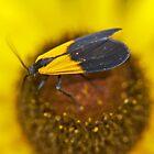 Lichen Moth - Lycomorpha pholus 70816 by MotherNature