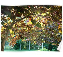 Summertime in the Trees Poster