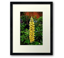 A Perfect Lupin Framed Print