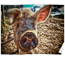 I oink, therefore I am Poster
