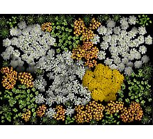 Flower Expressions Photographic Print