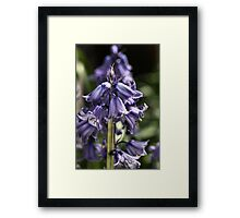 Bluebell Happiness Framed Print