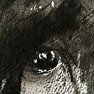 eyes & portraits......innocence by banrai