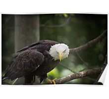 Defender of Freedom - Eagle Bird of Prey Posters, Prints Stickers Shirts Pillows Poster