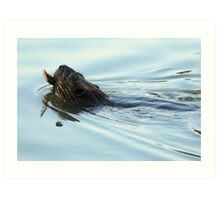 Beaver transporting a Branch to the Lodge Art Print