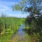 The Sweet Marsh in Summer by lorilee