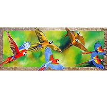 Parrot Party Photographic Print