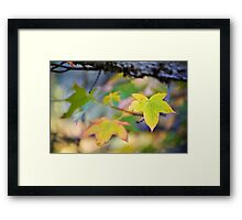 The Gift That Grows Framed Print