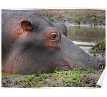 Hippo in the mud Poster