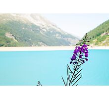 Austria, Zillertal High Alpine nature Park  Photographic Print