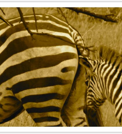 Zebras in Black and White Sticker