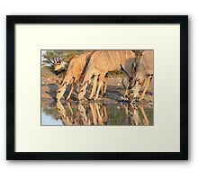 Kudu - African Wildlife Background - Reflection of Pleasure Framed Print