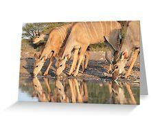 Kudu - African Wildlife Background - Reflection of Pleasure Greeting Card