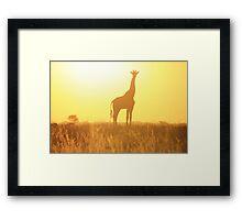 Giraffe - African Wildlife Background - Golden Posture Framed Print