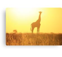 Giraffe - African Wildlife Background - Golden Posture Canvas Print