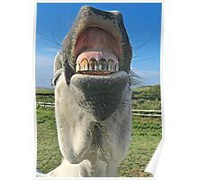 Neigh Toothbrush Poster