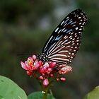 Butterfly Beauty  by sandysartstudio