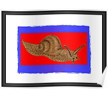 Banner AGC Mollusks Feature Poster