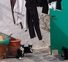 Washday Cats by Francis Drake