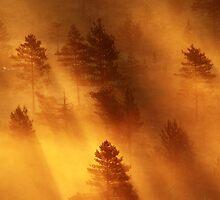 5.7.2014: When Light Is Born III by Petri Volanen