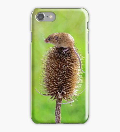 Harvest Mouse iPhone Case/Skin