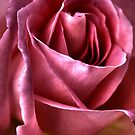 Passionate For Roses by Margi