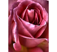 Passionate For Roses Photographic Print