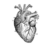 Anatomical Heart Photographic Print