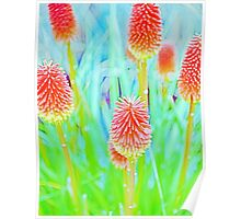 Winter Cheer - Making a Statement - Red Hot Poker Poster