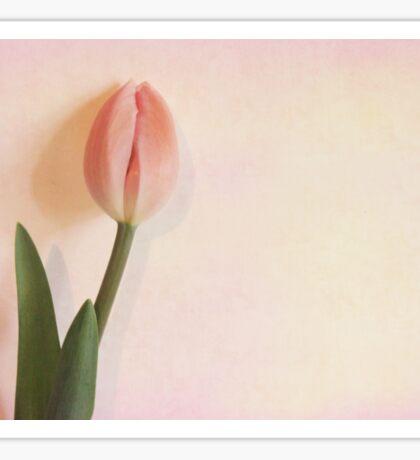 Tulip Bud Sticker