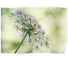 Queen's Lace Poster