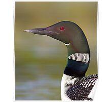 Common loon neckline Poster