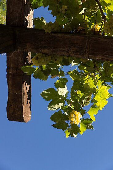 Harvest in the Sky - a Vertical View by Georgia Mizuleva