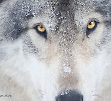 ..trough the eye of a Wolf.. by John44