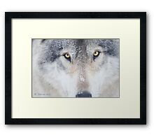 ..trough the eye of a Wolf.. Framed Print