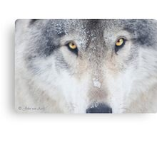 ..trough the eye of a Wolf.. Canvas Print