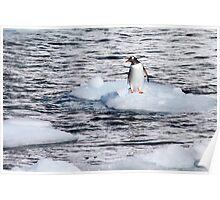 Gentoo penguins (Pygoscelis papua) on Danco Island  Poster