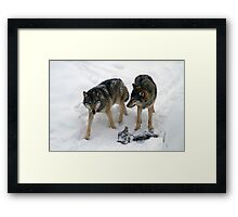 A pair of European gray wolves (Canis lupus), in snow, Finland, Lapland Framed Print