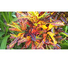 Sunshine Plant Photographic Print